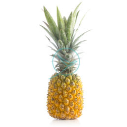 Queen Victoria Pineapple